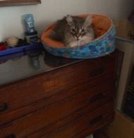 In her bed on bureau