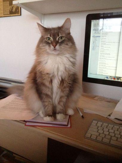 On computer desk