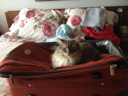 On suitcase on bed