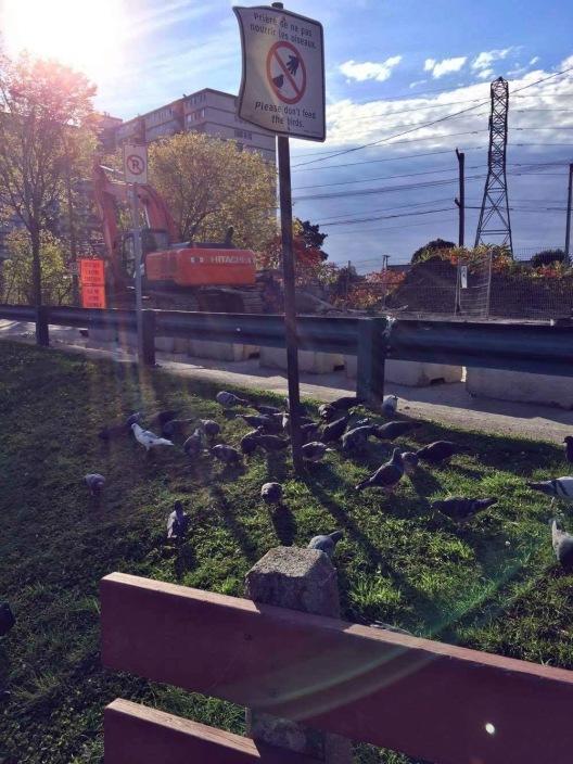 Pigeon potluck
