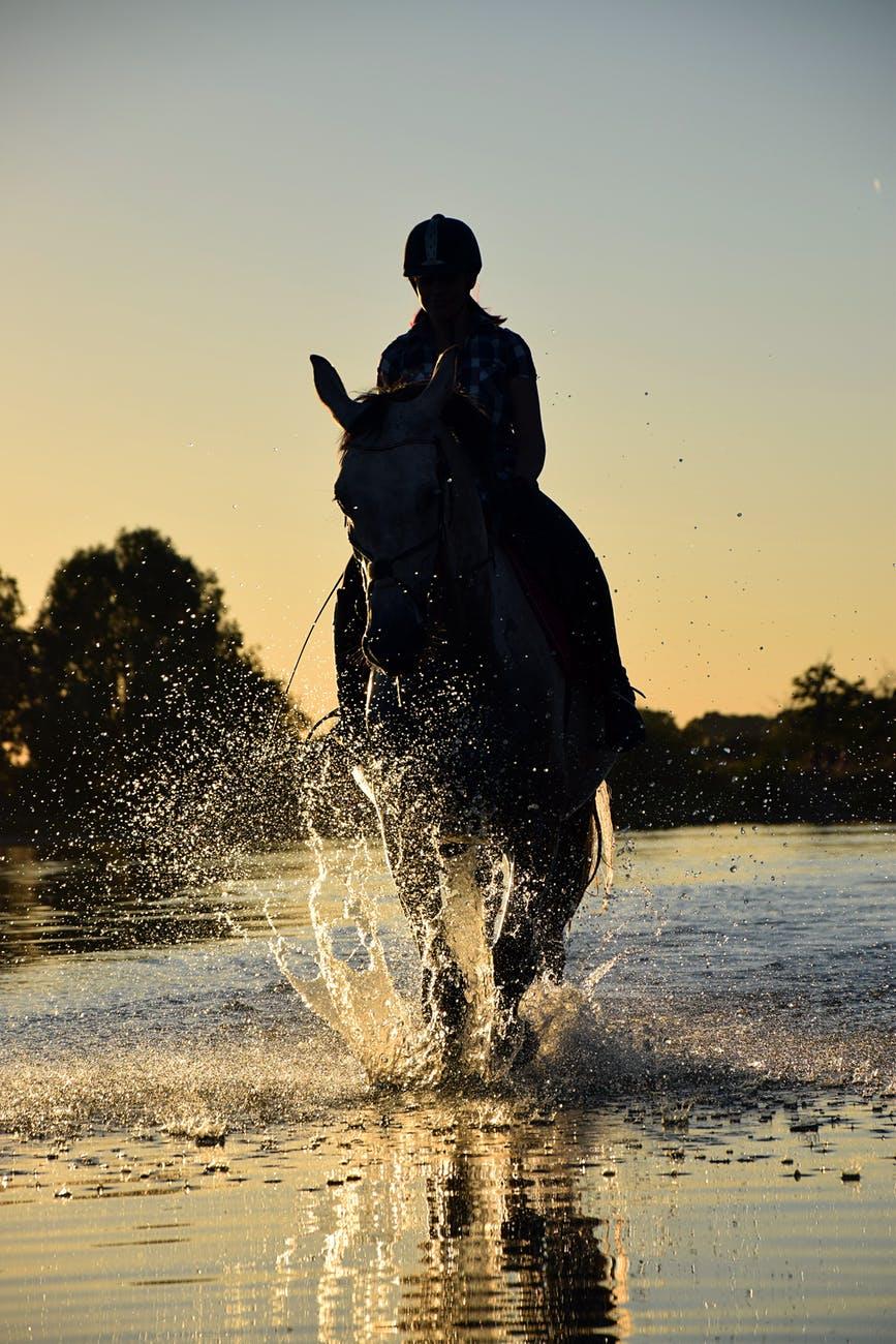 dawn dusk horse outdoors