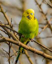 bright parakeet resting on tree twig in daylight